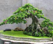 Một số kinh nghiệm khi chăm sóc cây cần thăng