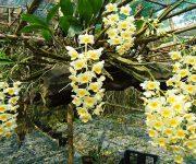 Hướng dẫn chi tiết chăm sóc cây hoa lan cho người mới