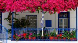 Kỹ thuật trồng và chăm sóc hoa giấy chuẩn