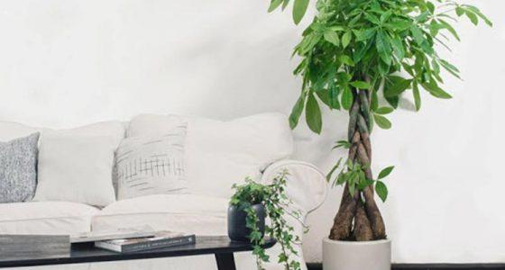 Cây xanh có khả năng làm giảm nhiệt độ trong nhà từ 5 – 8 độ C.