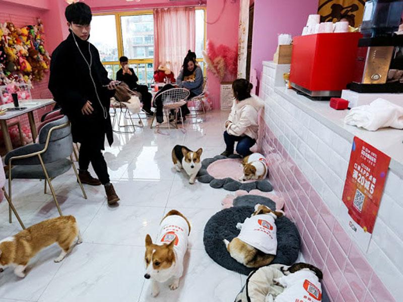 Kinh doanh quán cafe thú cưng