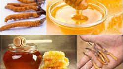 Tác dụng đông trùng hạ thảo ngâm mật ong