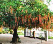 5 loại cây cảnh phong thuỷ trồng trước cửa nhà